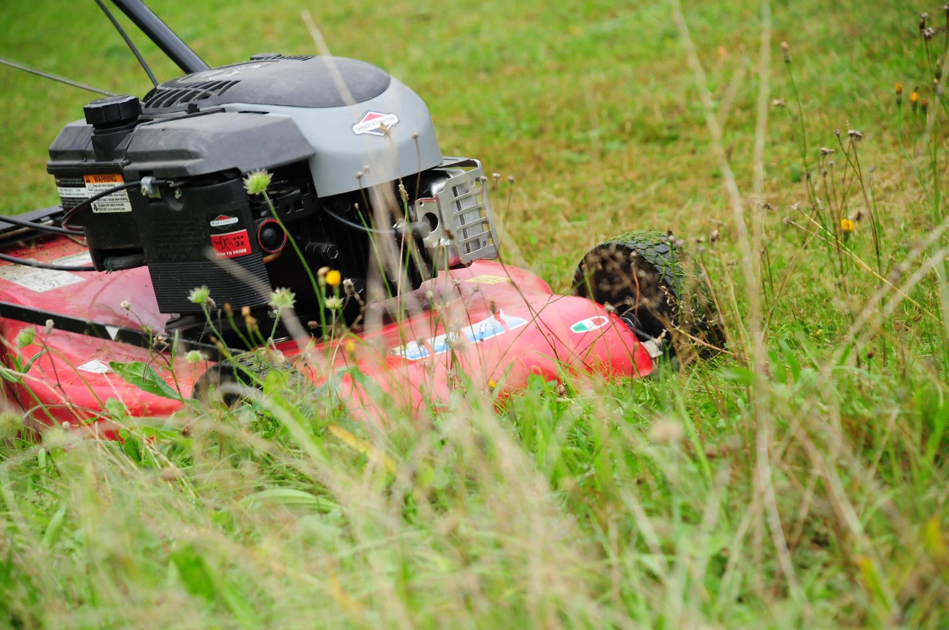 Wybór nowej kosiarki do trawy.